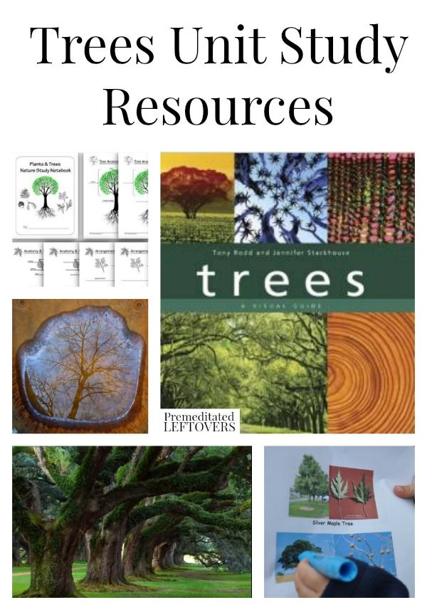 Tree Unit Study Resources, including educational tree videos, books about trees, tree identification projects, and other tree unit study ideas.