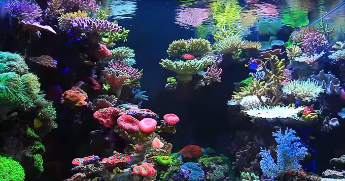 Jaw-dropping Korean reef aquascape