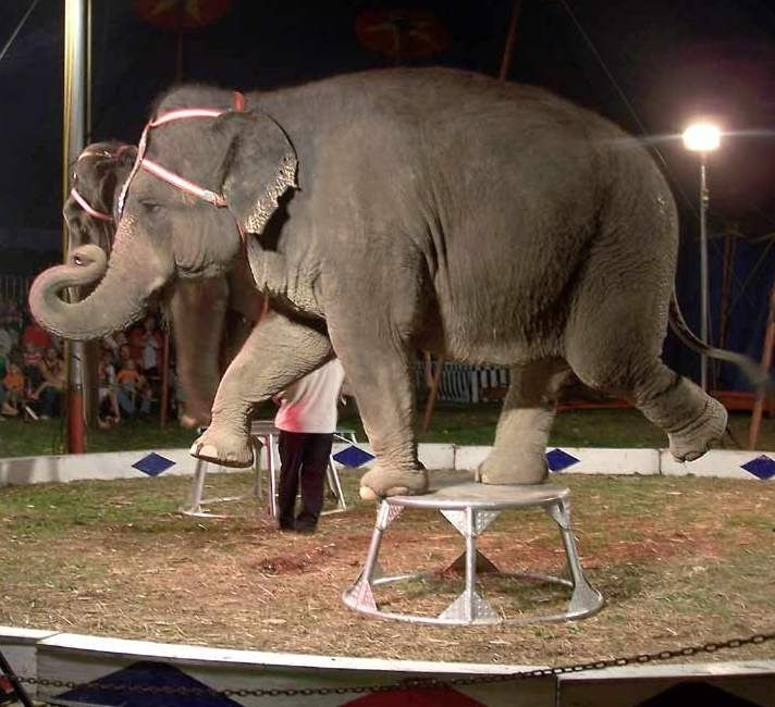 Tuberculosis-Facts about circuses