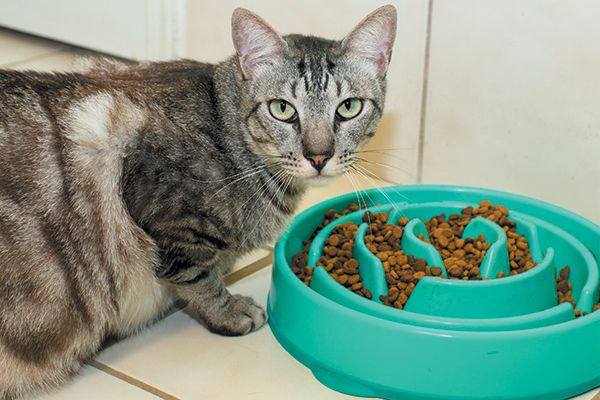How To Feed Cats Are We Doing It Wrong Catster In 2020 Best Cat Food Cat Nutrition Cat Food Brands