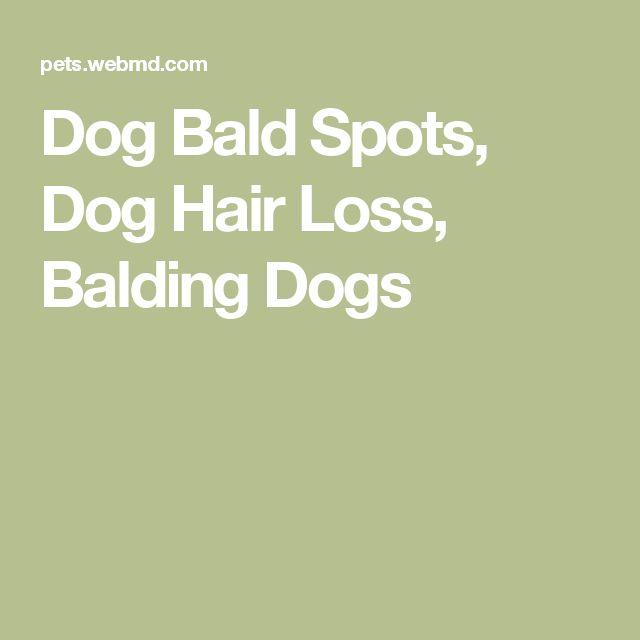 Best 20 Dog Hair Loss Ideas On Pinterest Loss Of Dog