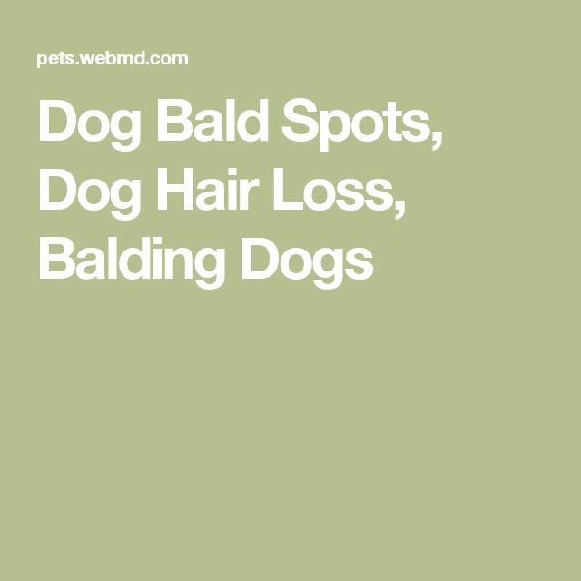 Dog Bald Spots, Dog Hair Loss, Balding Dogs