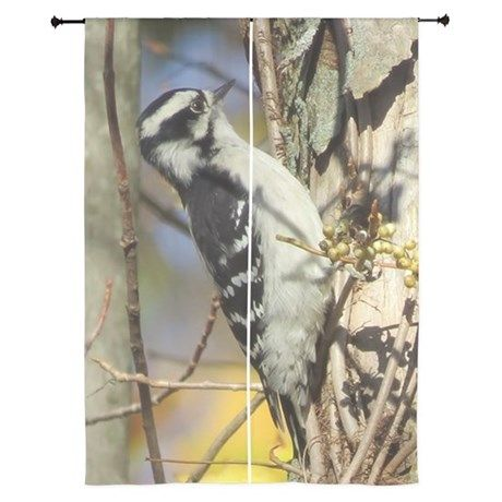 Woodpecker Curtains on CafePress.com