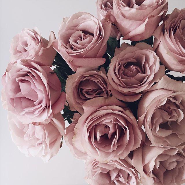 secret garden roses photo by @theflowercult