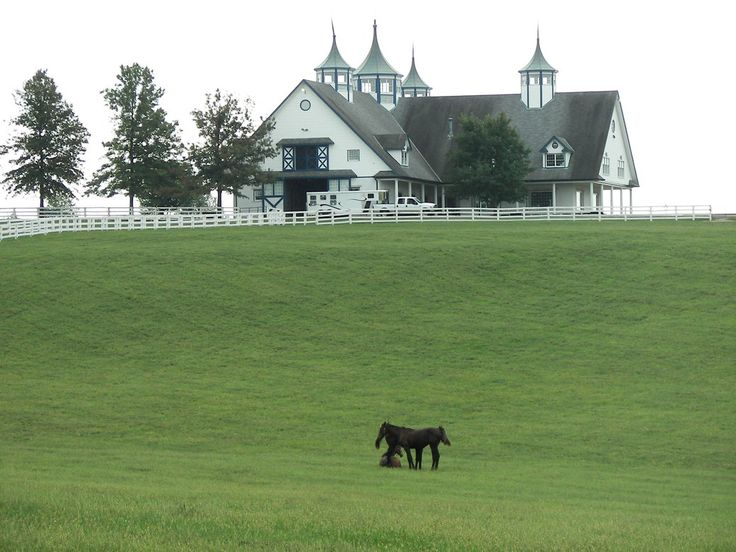 Horse Stables And Barns : Best images about equine barns beautiful stables and