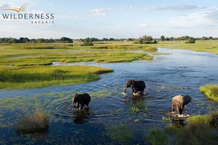 Tubu Tree Camp is built is the largest area of dry land in the vicinity during the flood season. Hunda Island has sandveld vegetation supporting many species of nutritious acacia and grewia shrubs which provide excellent browsing. #Safari #Africa #Botswana #WildernessSafaris
