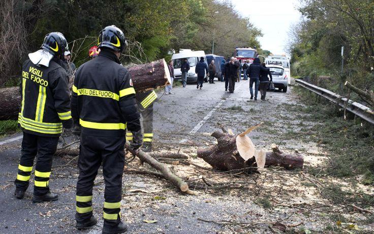 Maltempo, albero cade su un'auto: 2 morti e un ferito. Ad Ardea, alle porte di Roma, i 3 percorrevano via Laurentina quando è avvenuto l'incidente