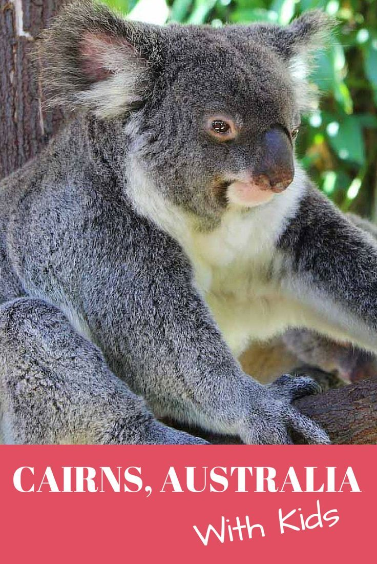 Lots of fun ideas of things to do with kids in Cairns, Australia. Includes the Cairns Tropical Zoo, a day trip to Kuranda and beach fun on Green Island.