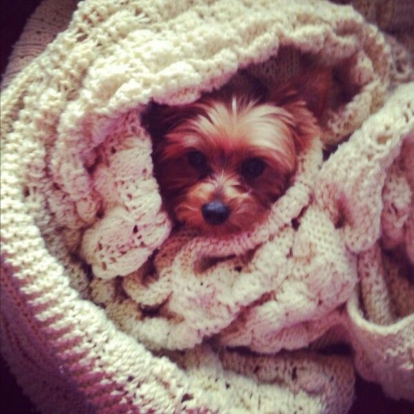 Sweet Baby Snuggled Up And Ready For Bed Cozy And Comfy