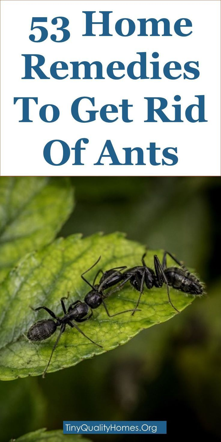 53 Home Remedies, Traps, And Repellents To Get Rid Of Ants