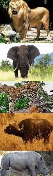 "Kruger National Park.....""The big 5"".....saw them all in 24 hrs...."
