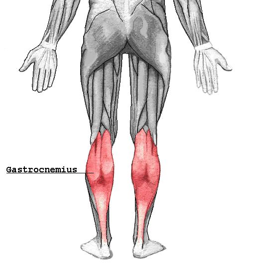 gastrocnemius, and a cool diagram of the posterior leg muscles.