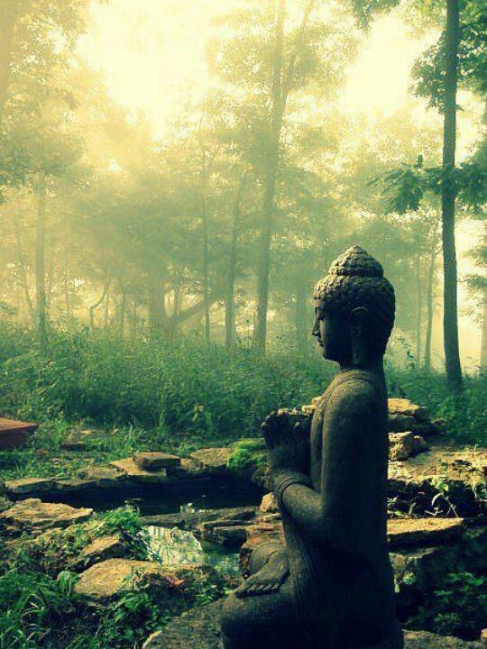 #Buddha in a misty wood