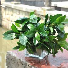 Большой лист искусственные цветы зеленые пластиковые деревья лаки leaf главная свадьба РОЖДЕСТВЕНСКИЕ украшения MA1784(China (Mainland))