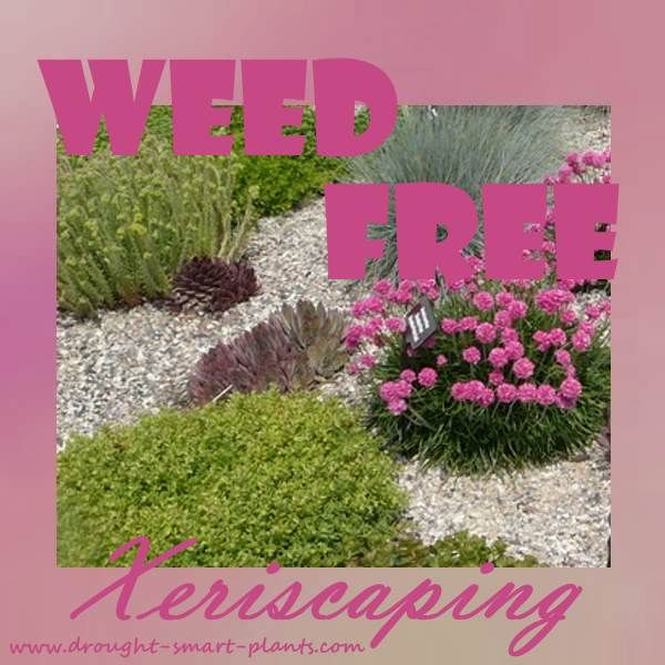 how to get wet weed dry