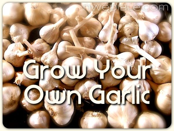 How To Grow Your Own Garlic, including details on hardneck and softneck types.