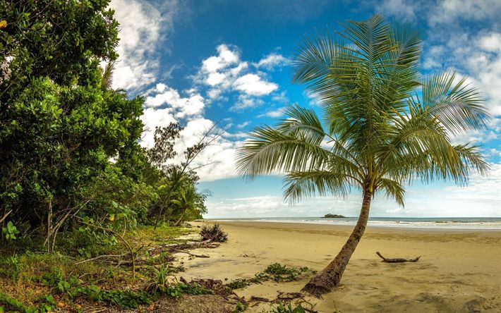 Download wallpapers tropical island, beach, palms, ocean, waves, jungle
