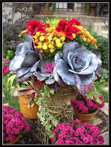 Kale & Autumn Flowers Container Gardening