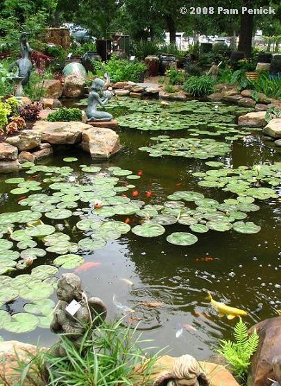 89 best koi fish stock tank images on pinterest fish for Koi pond wynn