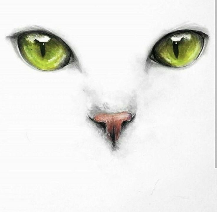 Картинки карандашом глаз кошек