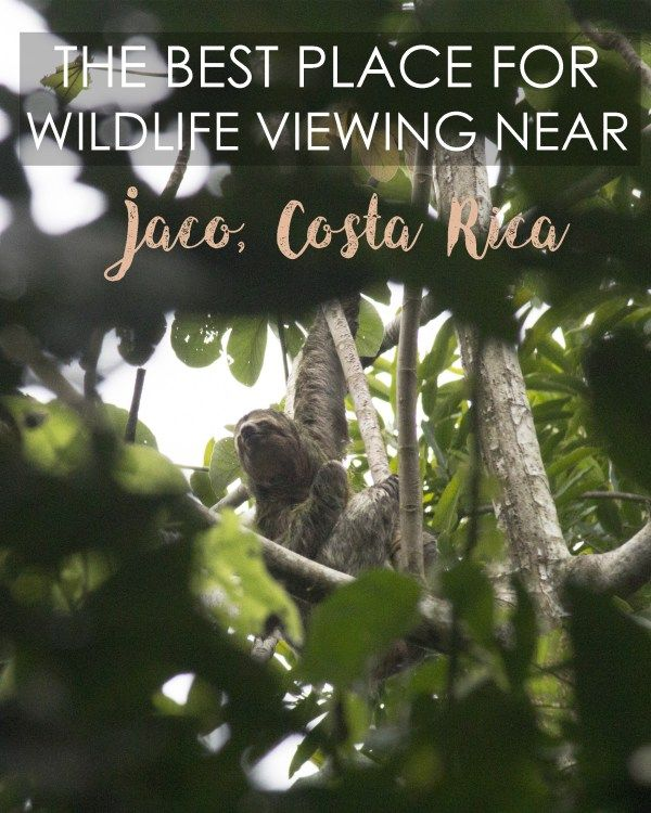 The Best Place for Wildlife Viewing Near Jaco, Costa Rica | Nicole Travels