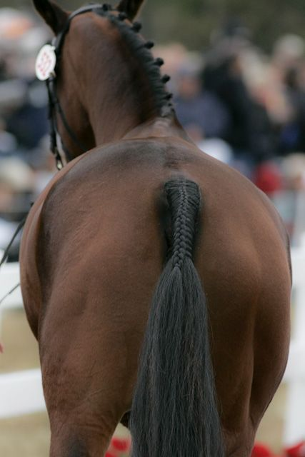 World Equestrian Games braided horse tail, photo by Josh Walker.  Braids never get old.