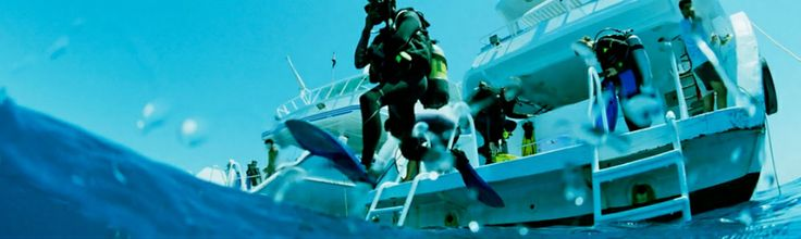 Dive in Maldives for groups and individuals