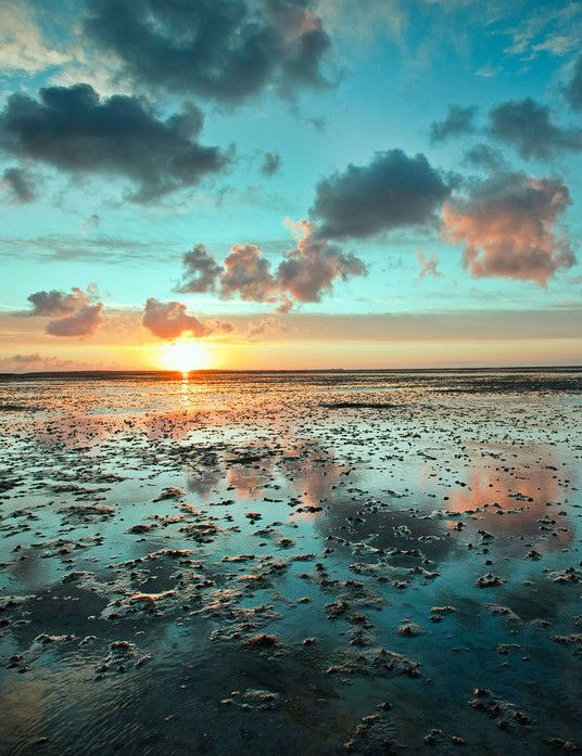 Wadden Sea: The Frisian Islands thread their way north along the coastlines of the Netherlands, Germany, and Denmark, shielding the Wadden Sea mudflats—the largest in the world—from the North Sea waves.