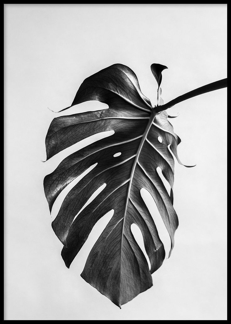 Nature's Upside, Poster - A tropical Monstera leaf print in black and white looks all the more beautiful when inverted on the poster.  Find inspiration for your wall decor and look for more modern minimalist art prints and posters at www.oppositewall.com