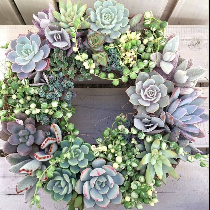 """""""Amazing wreath @limpopo_v_v_  Those variegated string of pearls are just…"""