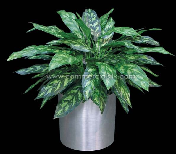 Chinese Evergreen Plant Care | House Plants & Flowers |Wholesale Silk Plants Chinese Evergreen House
