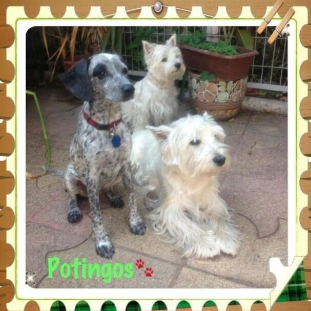#Potingos  #Valito #Julieta #Pongo The best pack Ever!!!