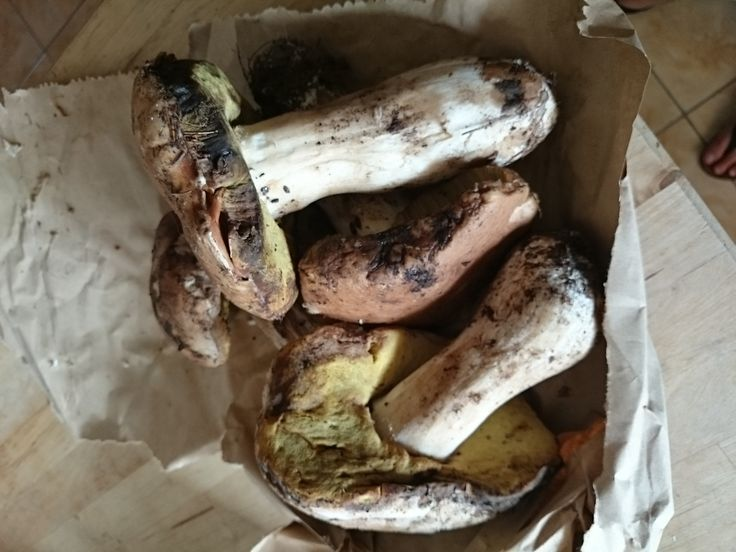 Fresh porcini: the best there is!