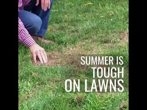 How And When To Aerate Your Lawn Garden Tools Home Vegetable