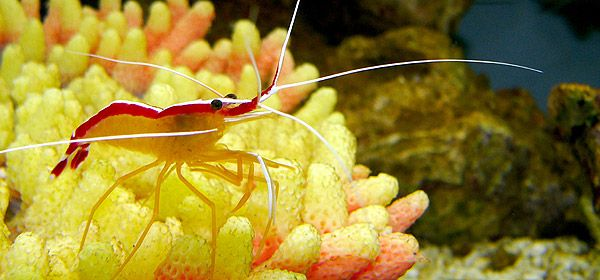 Korallen & Anemonen
