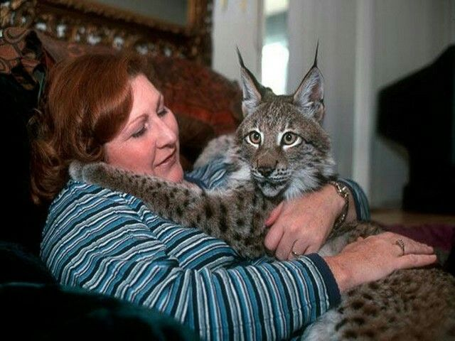 Exotic Cats Kept As Pets
