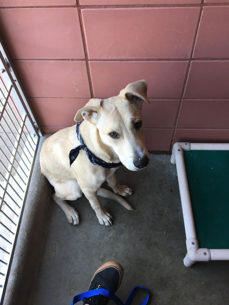 I volunteer at an animal shelter near me here are some of the puppers and doggos I walk. http://ift.tt/2lWeRyU