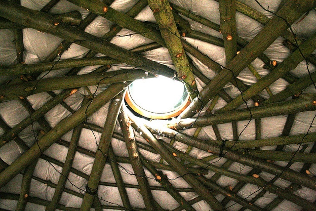 A better look at the ceiling.  (Do you see the spiraling Xmas lights?) Cobwood Round House Ceiling by Indicamama, via FlickrLocal Sources, Cob Buildings, Chestnut Logs, Spirals Xmas, Cob House, House Ceilings, Round House, Sources Sweets, Cobwood Round