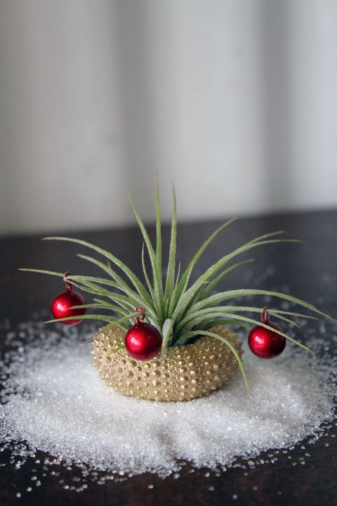 gold Donner  // air plant tillandsia // by by peacocktaco on Etsy, $14.95