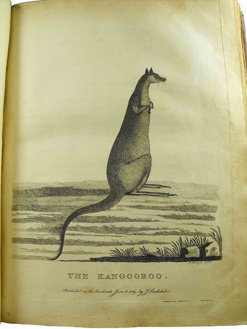 """The Kangooroo"", from ""Arthur Phillip: The Voyage of Governor Phillip to Botany Bay, Australia"" (1789)"