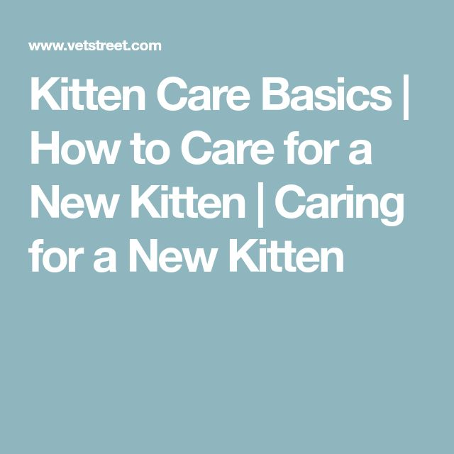 Kitten Care Basics | How to Care for a New Kitten | Caring for a New Kitten