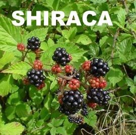 Resultado de imagen para Shiraca fruto