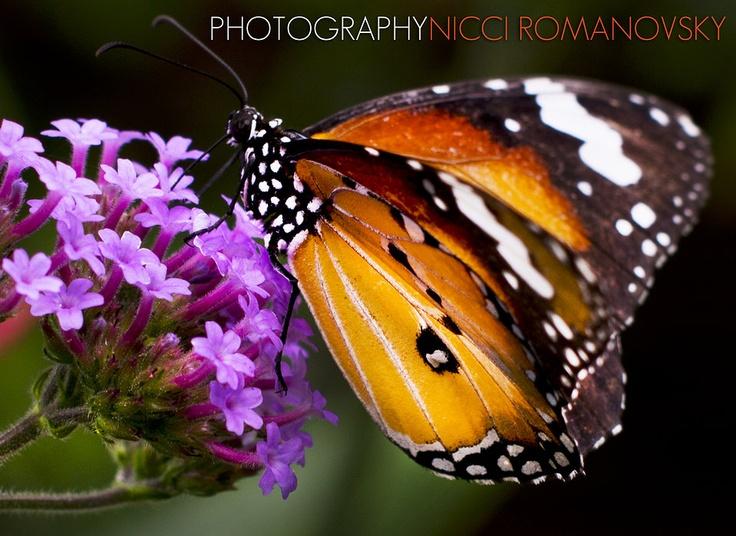 Photo by Nicci Romanovsky | Shotbynicci.com