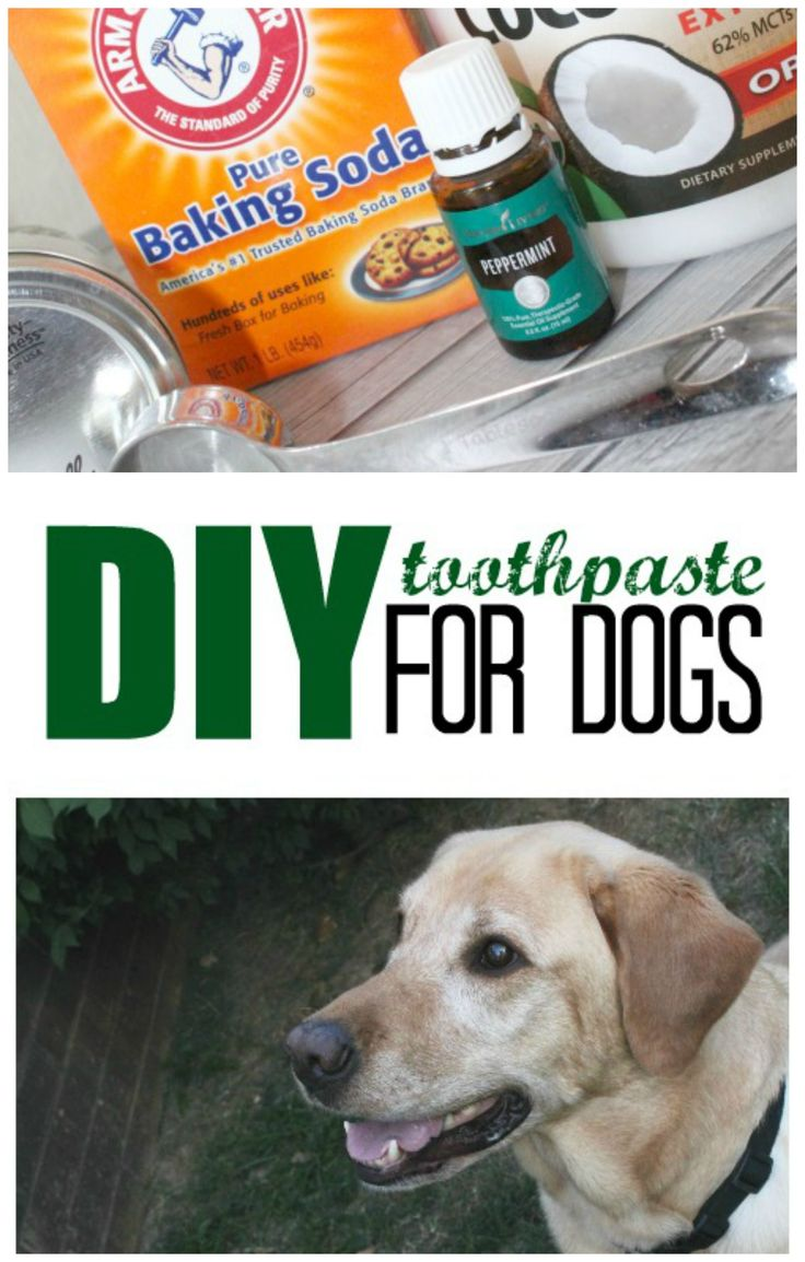 Diy toothpaste for dogs recipe dog toothpaste