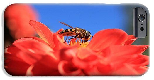 Flowers Fly On Dahlia 2 IPhone 6s Case for Sale by Sverre Andreas Fekjan…