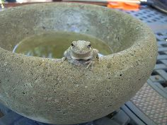 easy to make concrete bowls and planters, concrete masonry, diy, how to, See the complete tutorial for details of how to achieve this nice rounded edge bowl Frog not included