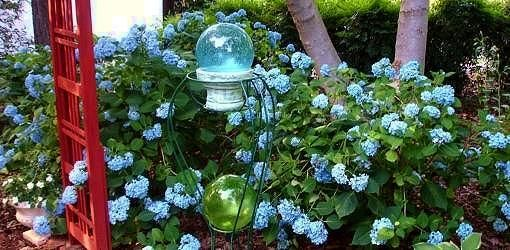 How to Grow Hydrangeas | Danny Lipford: Growing Hydrangeas, Garden Ideas, Floral Gardening, Beautiful Gardens, Grow Hydrangeas, Hydrangeas Bc, Dream Gardens