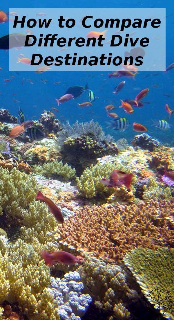 How to compare different dive destinations! Valuable information about dive destinations is changing due to previous diving experience, weather and time conditions and migrating marine life. http://www.diveoclock.com/blog/Compare_destinations/ Dive o'clock! scuba diving | underwater | ocean | sea life | diving | coral reef | dive the world | scuba diver | dive instructor | underwater photography | duiken | tauchen | under the sea | divemaster | open water | PADI advanced…
