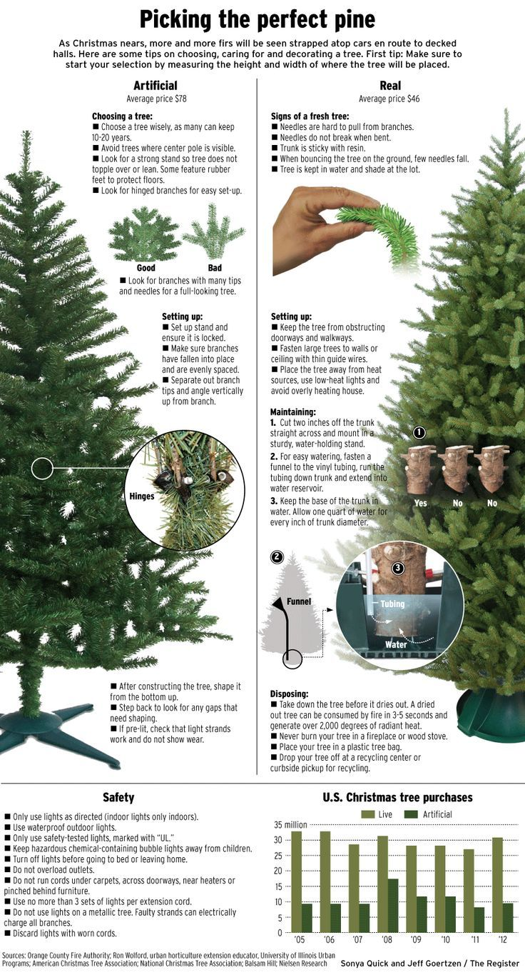 Fake Or Real What To Look For In A Christmas Tree Live Christmas Trees Christmas Tree Farm Christmas Tree Care