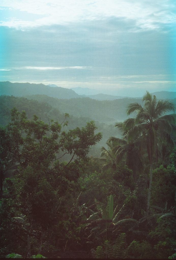Hipster, Green, Backgrounds, Peace, Beautiful Places, Tropical Paradis, Big And Beautiful, Palms, Jungles Rainforests